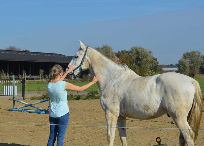 Kennismaking paard