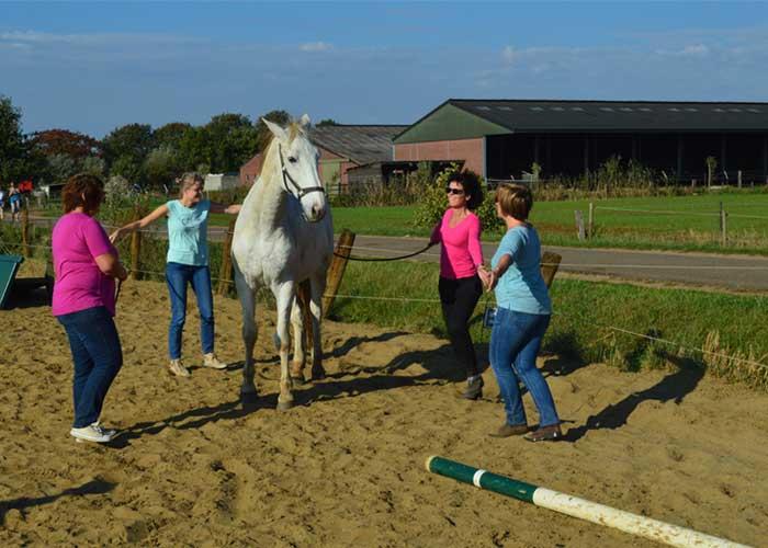 Oefening teambuilding met paarden