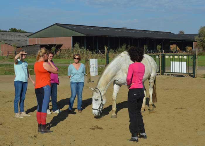 Teambuilding paarden oefening