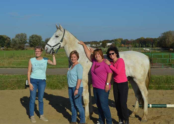 sfeer teambuilding met paarden
